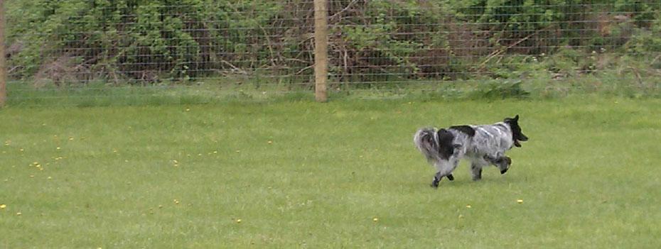 Dog Wild Dog Park
