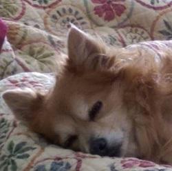 Monty Sleeping