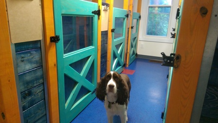 Small Dog Rooms