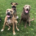 Dog Wild Daycare Dogs