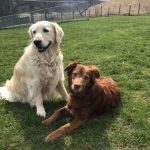 Dog Wild Daycare